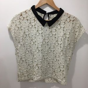 Lace Crop Top with Black Collar